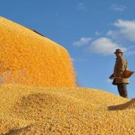 粮油作物种植